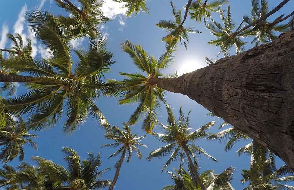 KopfNuss Kokoswasserschorle unsere Philosophie